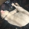 猫さんたちは、毎日がお昼寝日和。