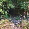 麓池(和歌山県紀の川)