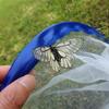 ひらひら舞っている白い蝶 ウスバシロチョウ