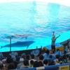 【神戸のおすすめスポット探索】須磨海浜水族園(スマスイ)へ
