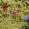 今シーズンの箱根美術館と強羅公園の紅葉2020.11.13時点