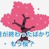お正月が終わったばかりなのに・・・ もう桜?