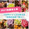 たにログ268 【100均多肉まとめ】ダイソー&シルク&キャンドゥ 100円ショップで買える多肉一覧(2021年)⑥