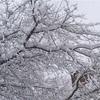 カナダ在住1年目と2年目の違い【11月〜3月比較写真】