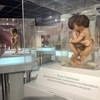 バンコクで行くところが無くなったタイリピーターに勧める シリラート死体博物館&人体の不思議展【行き方】