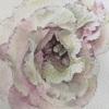 透明水彩で描く花