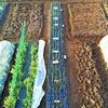 3月の菜園!追悼ポンタさん♬