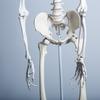 骨盤周りを引き締めたいなら腸腰筋を鍛えなさい!