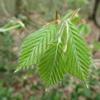 5/9      獅子ヶ鼻湿原⑤…かわいい植物たちを眺めながら