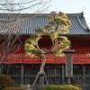 🌝上野公園 月の松🌕