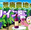 『荒廃地をワイン畑に』って?ジュースじゃダメなの?
