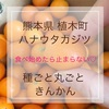 熊本県植木町ハナウタカジツの種ごと丸ごときんかん★食レポ