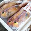 2020年10月1日 小浜漁港 お魚情報