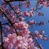 2week4『平日』&『週末』 〜春一番♪〜