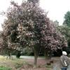 サザンカの咲く園