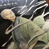 覚え書き日記『競馬に競艇そして将棋アニメ?』(2017・3/19)