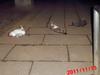 猫系図 あかちーの子孫たち