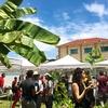青空の下でビールとヴィーガン料理!カンボジアで「Vegan & Vegetarian Food Festival!」に参加してみた