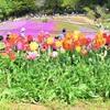 簡単にお庭を華やかに!!この時期植え付けの植栽、おすすめの植栽