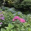 友達の懐事情と紫陽花