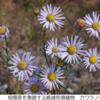 開館25周年記念企画展「神奈川の植物、相模原の植物 植物誌から考える生物多様性」