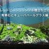 レッドビーシュリンプ水槽作り方〜青華石とキューバパールグラス編〜