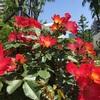 花かおる季節