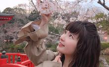 桜は三分咲き、五分咲きに満開。「今度のお休みはどこ行きたい?」を英語で書いてみよう。