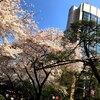 桜まつり🌸inグランドプリンスホテル高輪