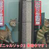 富山湾で季節外れの蜃気楼『だるま朝日』が出現&義弟宅を『ニャルソック』する2ニャン♪