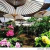 【奈良】日傘を差す牡丹の花