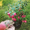 ガーデニング初心者の冬花壇