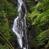 滝の写真 No.14 岡山県 大沢の滝