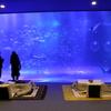 ジンベイザメがいる水槽を前にコタツに入るという至極ののんびり