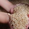 高いお米と安いお米の違い コメ農家になったから知った事実