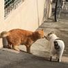 江の島(Enoshima)のライトアップは、猫のカップルもソワソワ嬉しい時期