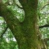 Deep Learningを用いて樹皮による樹種同定を行なおうと思ったわけ