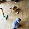 猫シッターの季節