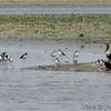 ベリーズ 湖畔の鳥たちの静かな風景
