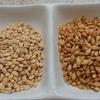 大麦の玄麦が手に入ったらラッキー!食べ方はシンプルが一番です