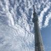 秋の遠足⑥東京スカイツリーは大きかった。