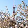 東京タワーと333匹下さい鯉のぼり(昼編)さくらちゃんとツツジちゃんも