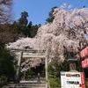 国宝 大崎八幡宮 桜と和歌山