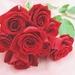 花のコンシェルジュがおススメする自分で花束を保存する★花を残す方法ベスト3