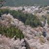 【関西旅】 奈良県 吉野 桜