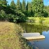 野口水ばしょう公園の池(新潟県十日町)