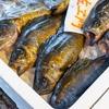 2021年2月27日 小浜漁港 お魚情報