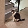 階段の誘惑