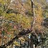 冬の日差し、雀の群れ、梅の蕾
