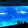 沖縄海洋博公園内「美ら海水族館」の徹底攻略 裏技・穴場も紹介!